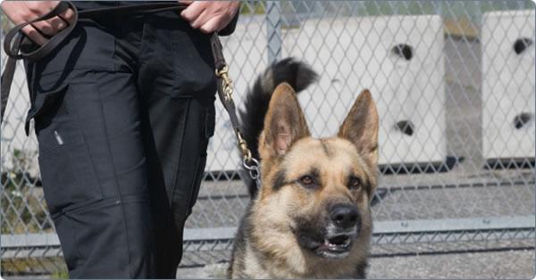 Private Security Guards California